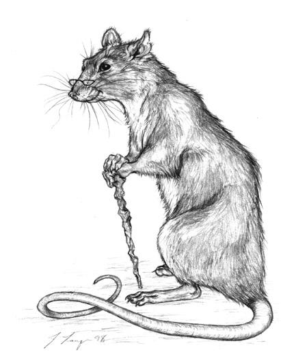 Ivan the Rat by GrimVixen