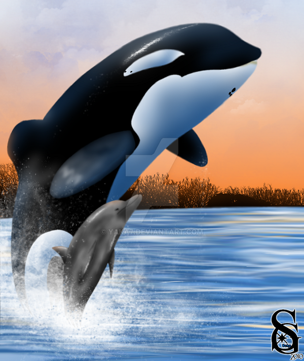 free willy meets flipper by yaka7 on deviantart