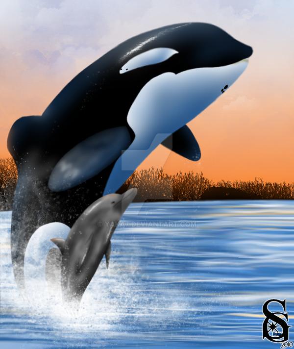 free flipper