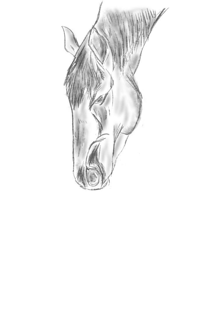 Horse - sketch 1 by cien0