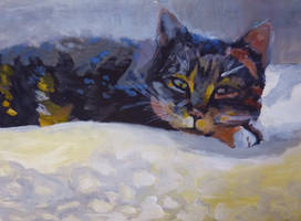 my cat... by nena211