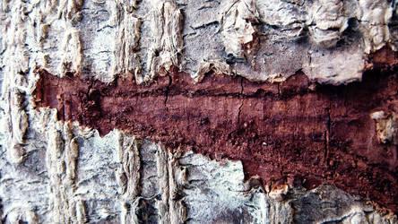 A trees scar.