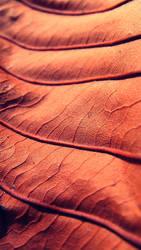 Dry sheet