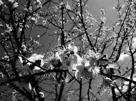 feel the spring I bw