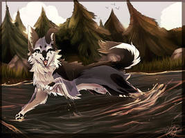 Dog playing in water by VictoriaTory2020