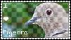 PIDGEONS! :D by 0pulent