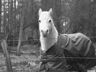 Horse by EnchantedByDarkness