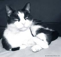 Cat by EnchantedByDarkness