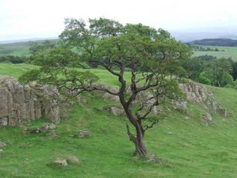 Tree by EnchantedByDarkness
