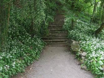 Woodland Steps 1 by EnchantedByDarkness