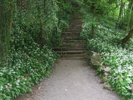 Woodland Steps 1