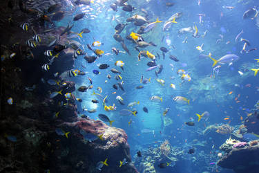Steinhart Aquarium 2