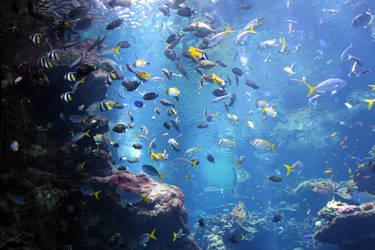 Steinhart Aquarium 2 by unknownorl