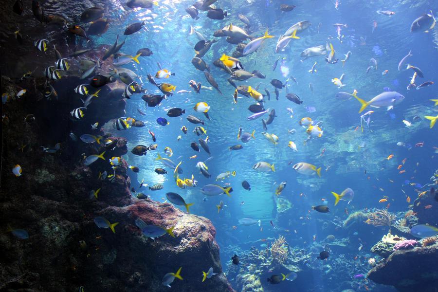 Steinhart Aquarium 2 By Unknownorl On Deviantart