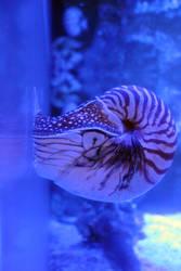 Steinhart Aquarium 3
