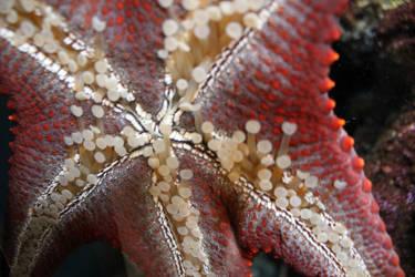 Steinhart Aquarium 4 by unknownorl