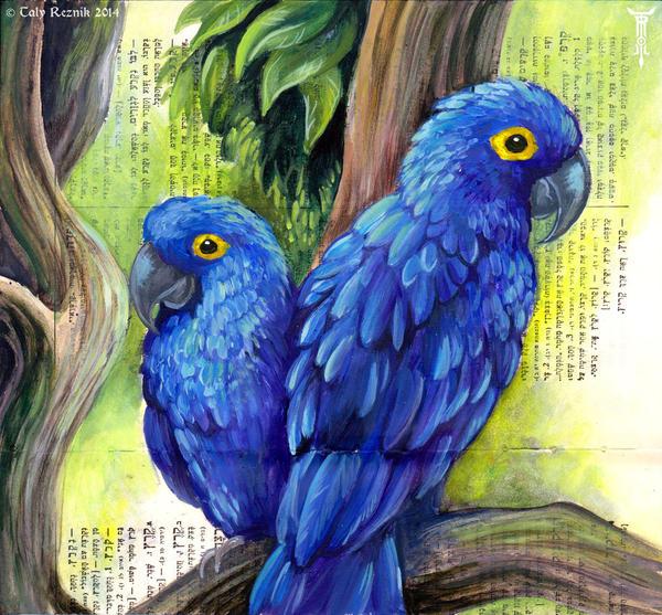 Hyacinth Macaws by TrollGirl