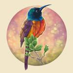 Decembird#3 - colorful