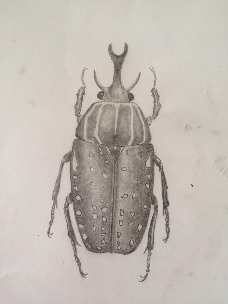 A beetle  by 1800imaZombieChicken