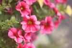 Pinks by Meemooi