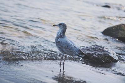 Seagull Printable