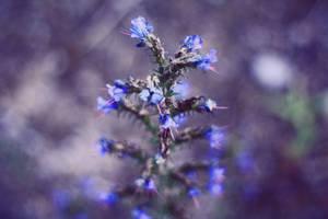 Purple Dreamer