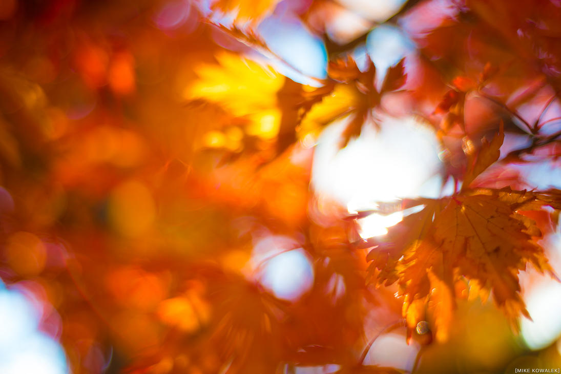 Soft Leaves by RocknamLee