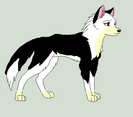 My Wolf OC ''Jake'' by UnicornRarity