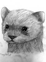 Black-Footed Ferret by FuzzyOwlFeet