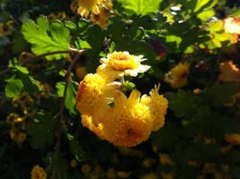 Flower by 0BurN0