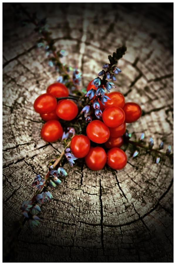 Crveno ... - Page 6 Lie_Berries_by_sergemeeus