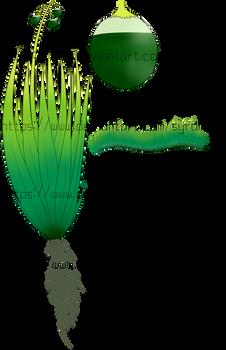 [Plants of Ditee-ath] Bittergrass