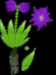 [Plants of Ditee-ath] Gilliflower (Downy)