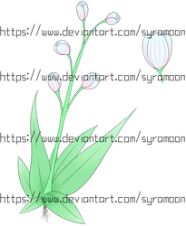 [Plants of Ditee-ath] Milfoil