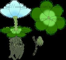 [Plants of Ditee-ath] Flowering Riverweed