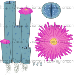 [Plants of Ditee-ath] Lithishi