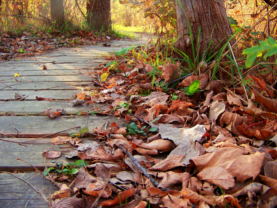 Winding Wooded Walk Way by MadGardens
