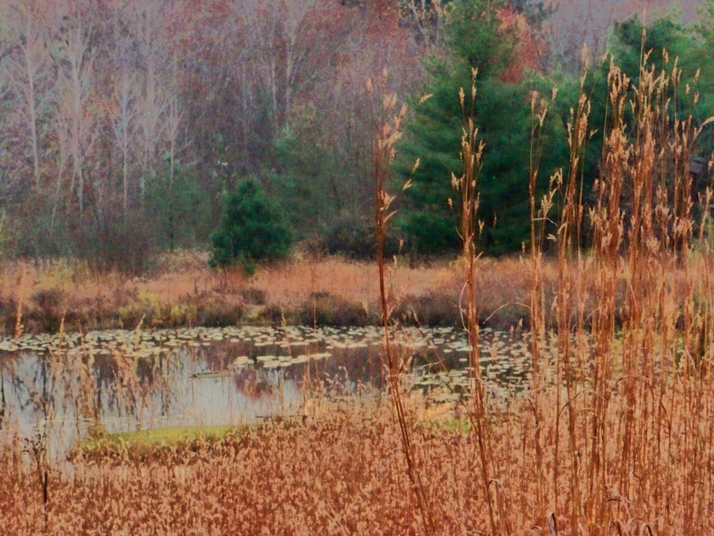 Gorman Nature Center Closed Sundays
