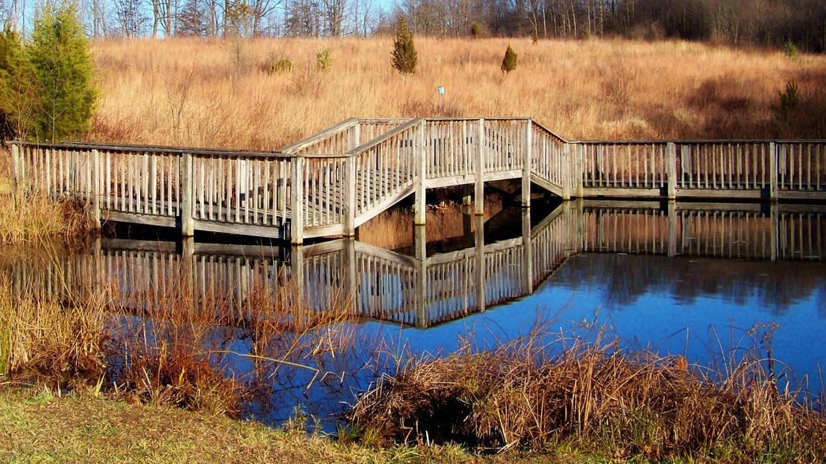 Gorman Nature Center Beaver