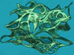 Surreal Turtle, Color