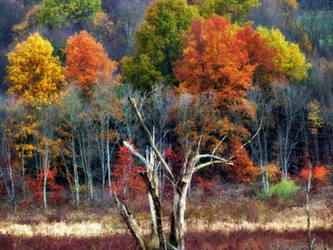 Shades of Autumn 9 by MadGardens