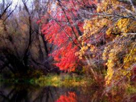 Shades of Autumn 15