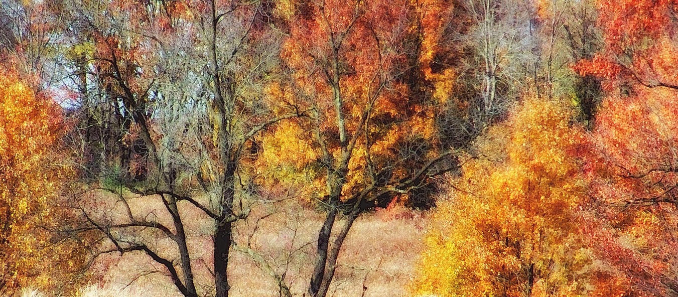Shades of Autumn 19 by MadGardens