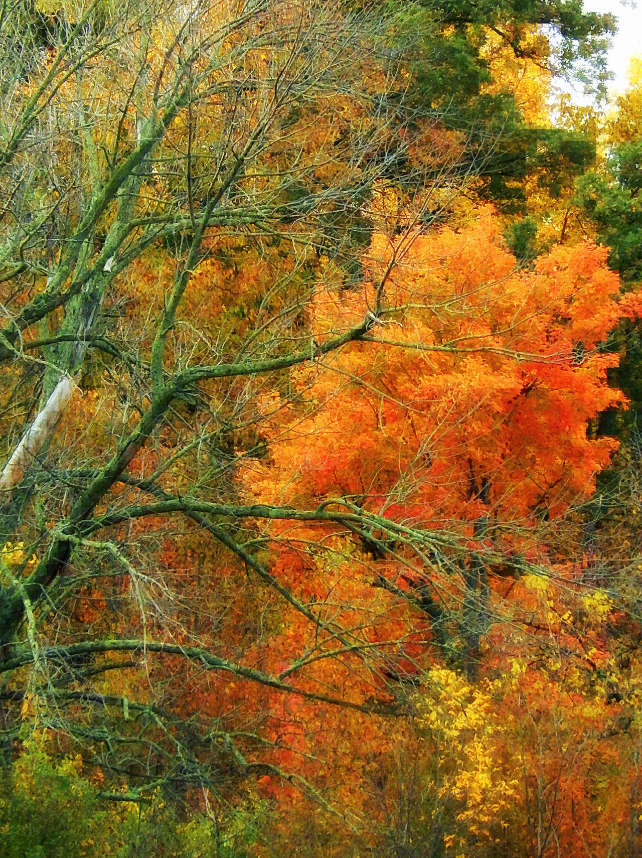 Shades of Autumn 2014.III by MadGardens
