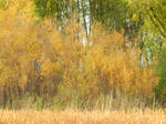 Shades of Autumn 2014.II by MadGardens