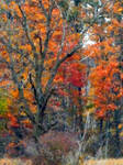Shades of Autumn 2014.XXIII by MadGardens
