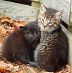 Kitties II
