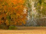 Shades of Autumn 2015, 11