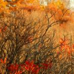 Shades of Autumn 2016, 2