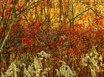 Shades of Autumn 2016, 14